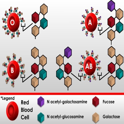cellular chemistry of carbohydrates in blood types